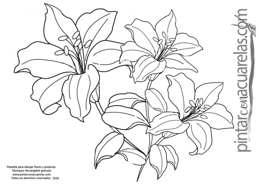 Plantillas con dibujos de flores lista para imprimir
