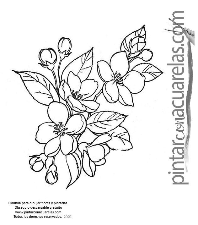 Plantillas con dibujos de flores para pintar