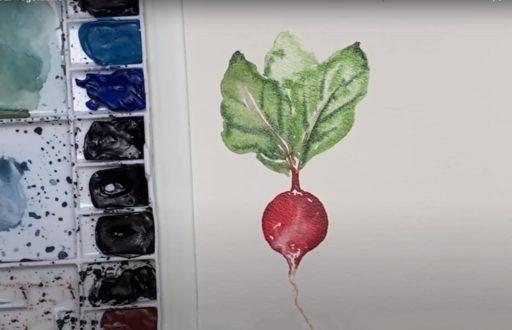 Rabanito en acuarela. Cómo pintar con acuarelas Técnicas básicas