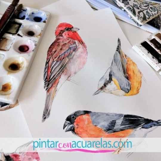 Pájaros en acuarela sobre papel . Pintar con acuarelas .com