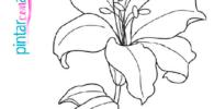 plantilla de flores para pintar con acuarelas, descarga gratis para imprimir