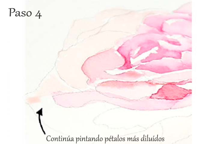 Paso 4. Tutorial paso a paso cómo pintar una rosa en acuarela