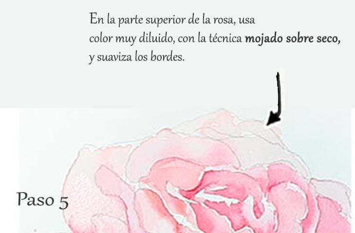 Paso 5. Tutorial paso a paso cómo pintar una rosa en acuarela