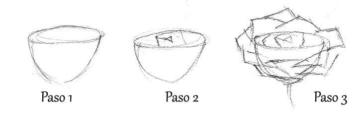 anatomía de una rosa para dibujar