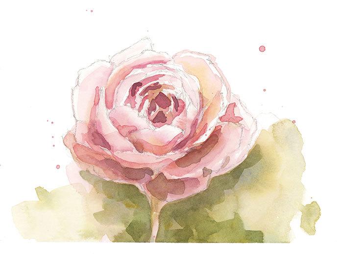 Boceto rápido de nuestra pintura de Rosa en acuarela