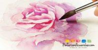 Cómo pintar un rosa en acuarela