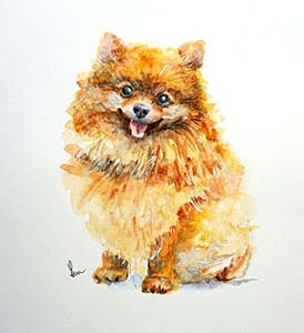 Pinta un perro pomerania con acuarela