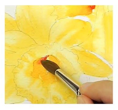 Agrega más otro naranja más rojizo a los centro de los narcisos en acuarela.
