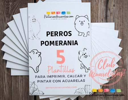 5 plantillas GRATIS de Perro Pomerania para pintar con acuarela.