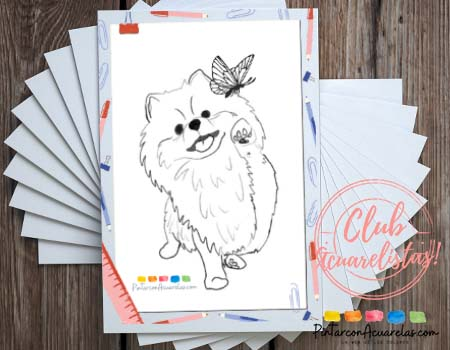 Plantilla con dibujo de un perro pomerania para descargar e imprimir.